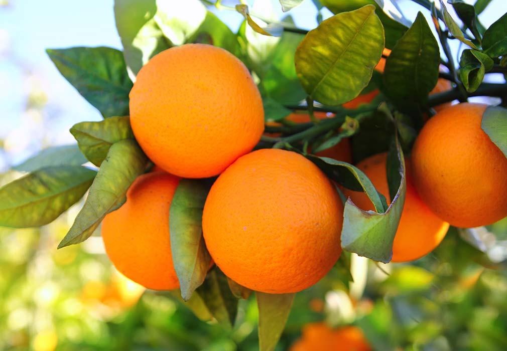 Oranges in skincare