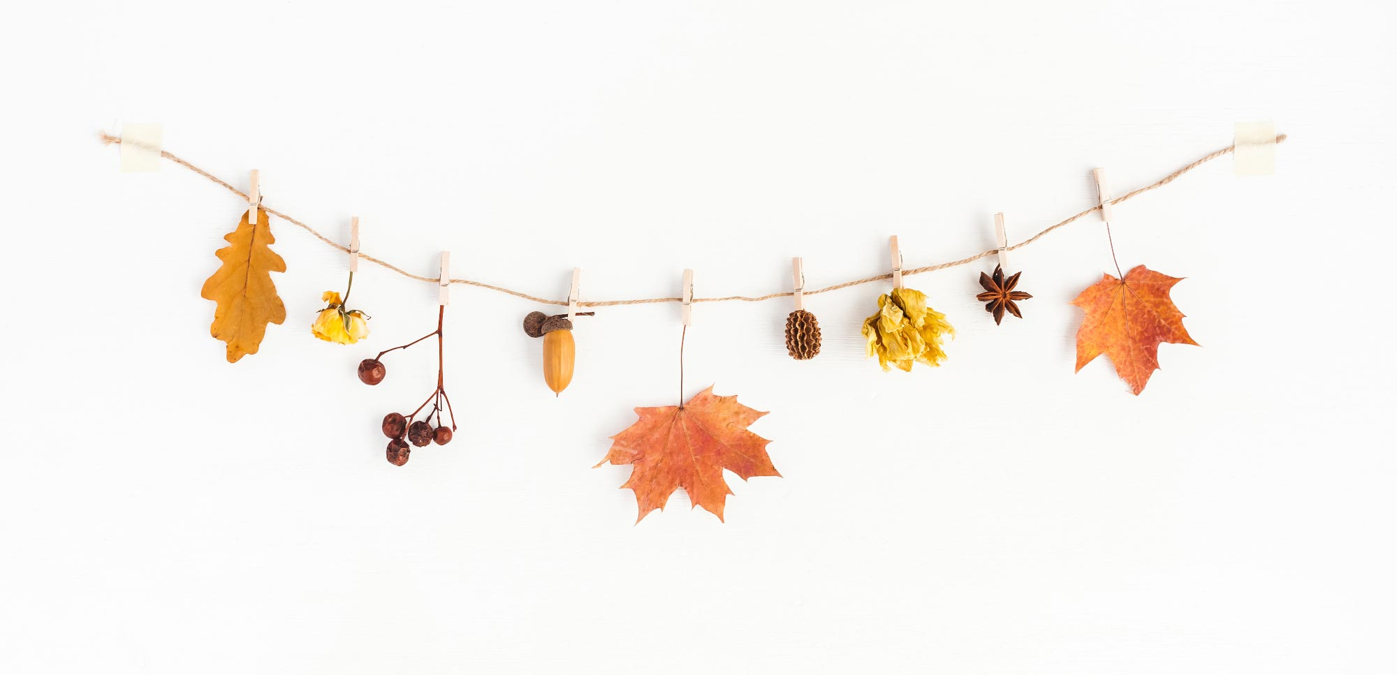 autumn leaves colours white wood