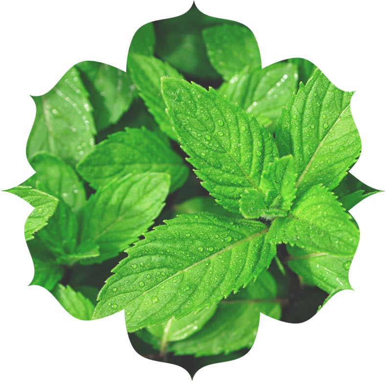 Spearmint ingredient in urban veda skincare
